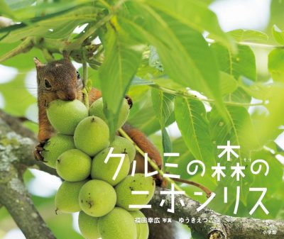 Japanese Squirrels of Chestnut Forest