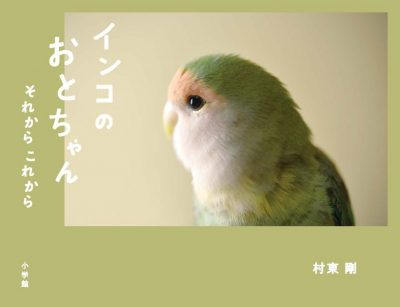 Oto, the Lovebird: Then and Now
