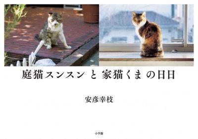 庭猫スンスンと家猫くまの日日